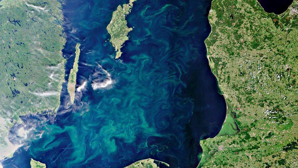 Ostsee: Die Blaualge breitet sich aus