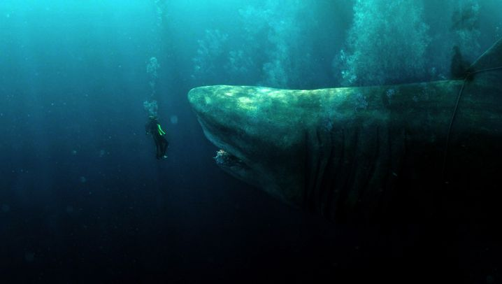 Hai-Thriller: Jurassic Shark
