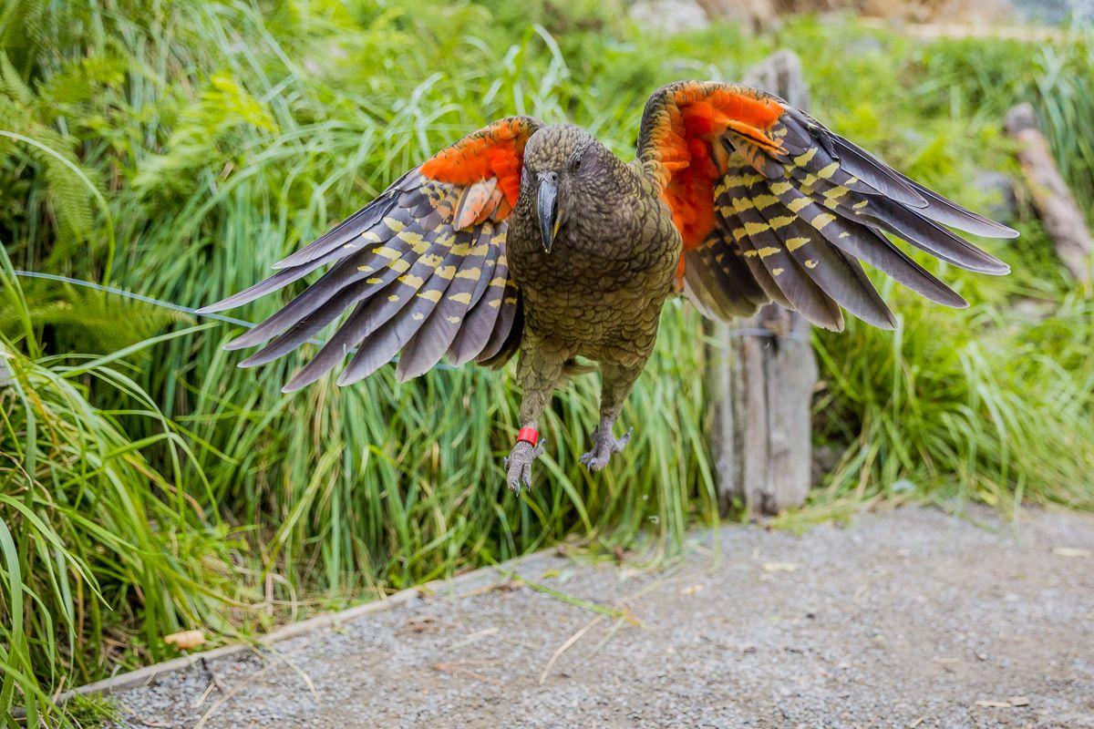Bild der Woche Papagei7