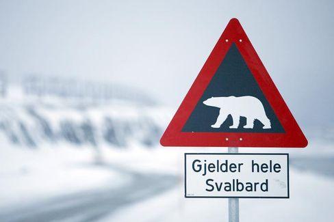 Vorsicht Eisbären: Die putzigen Tiere können für Polar-Besucher gefährlich werden.
