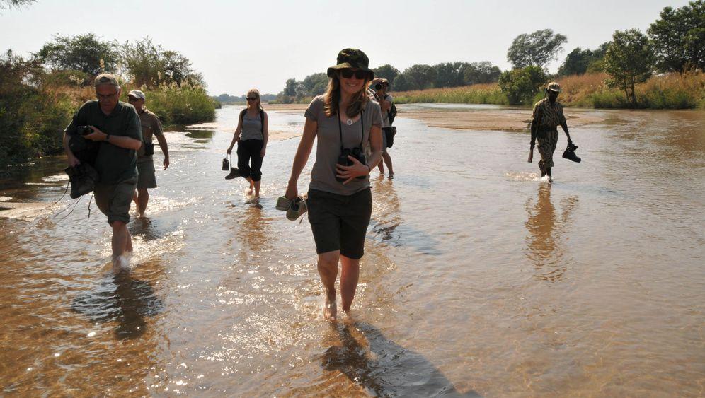 Wandersafari in Sambia: Dem Löwen auf der Spur
