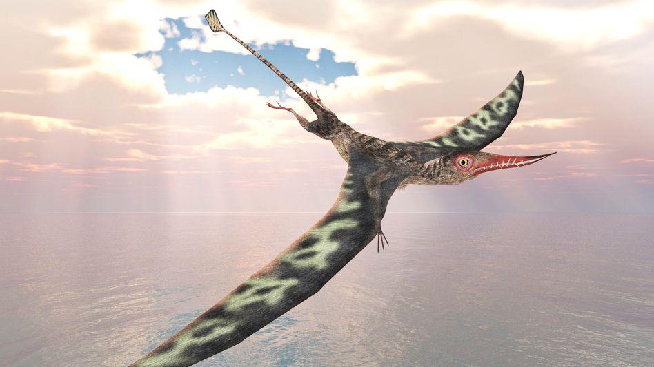 Zeichnung des Flugsauriers Pterosaur Rhamphorhynchus