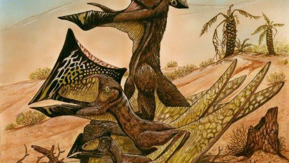 Flugsaurier: Ausgewachsene Exemplare präsentierten einen auffälligen Knochenkamm