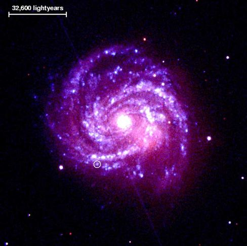 Can Darwinism explain the creation of the universe as well?