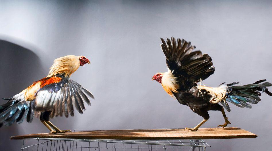 Hahnenkampf: Mit zu aggressivem Gebaren bringen Bewerber sich um ihre Chancen