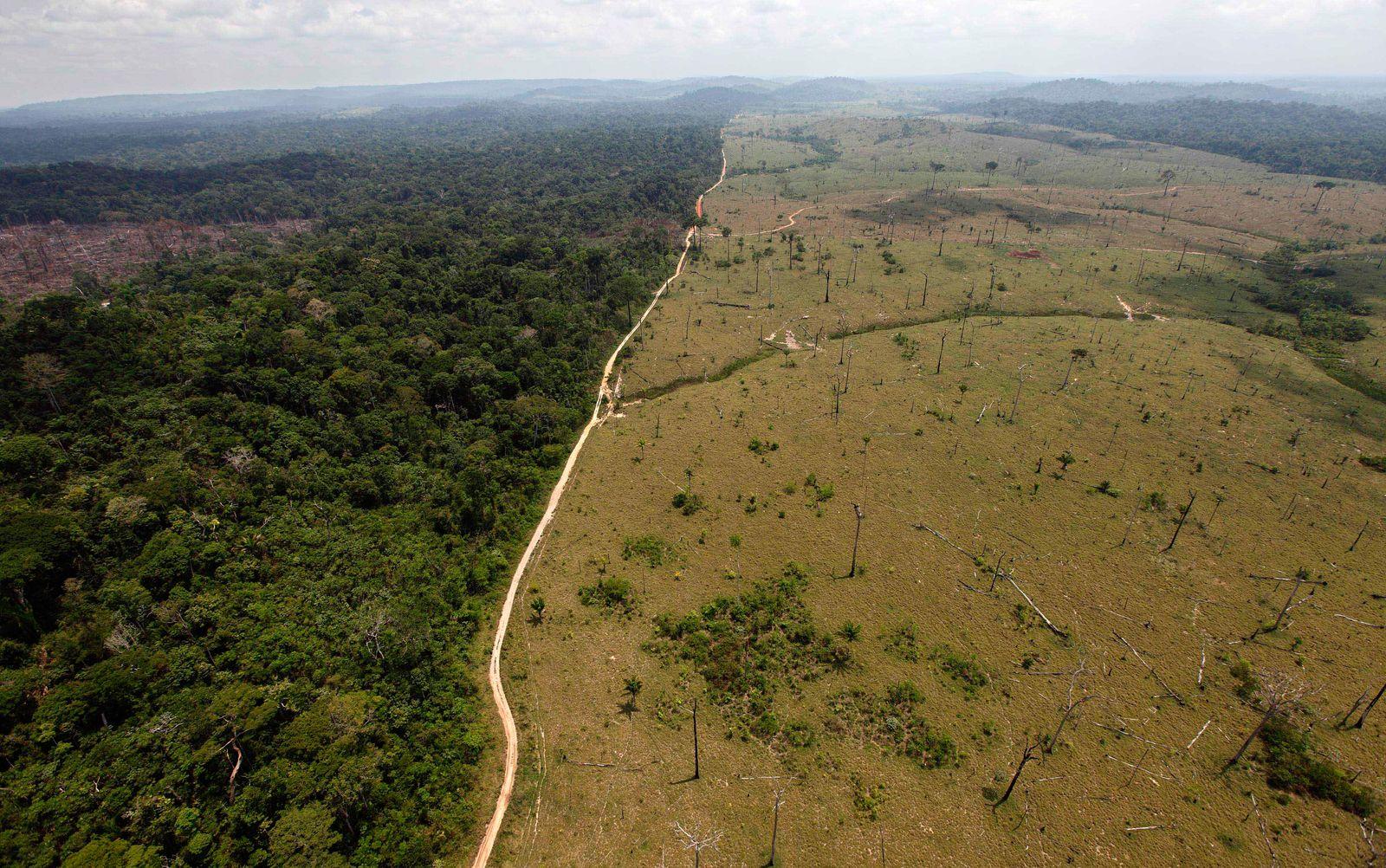 Umweltzerstörung/ Amazonas