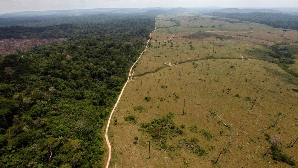 Abgeholzter Regenwald in Brasilien: Papst sieht Schutz der Natur als urchristliches Anliegen
