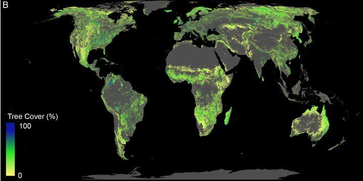 Die Karte zeigt, in welchen Regionen aufgeforstet werden könnte