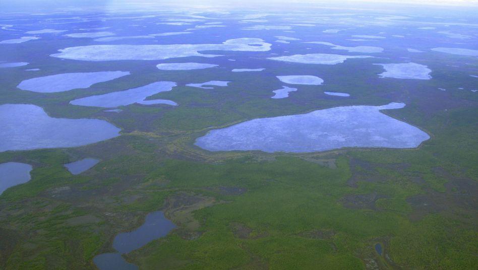Thermokarst-Seen in Sibirien (2007): Lebensraum für widerstandsfähige Bakterien