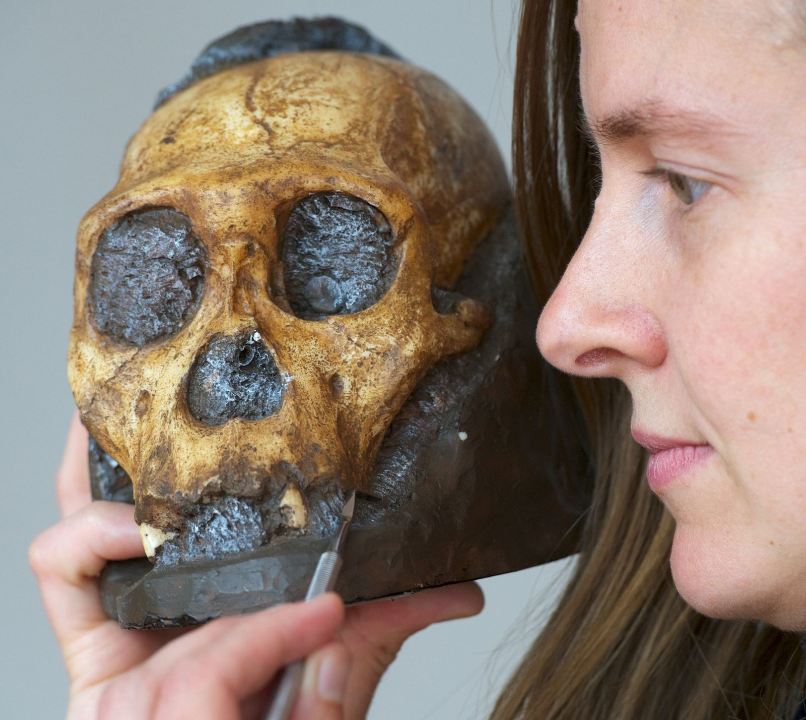 Der Australopithecus sediba aß Baumrinde