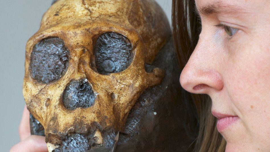 Anthropologin Amanda Henry zeigt den Schädel eines A. sediba: Reichhaltiger Speiseplan