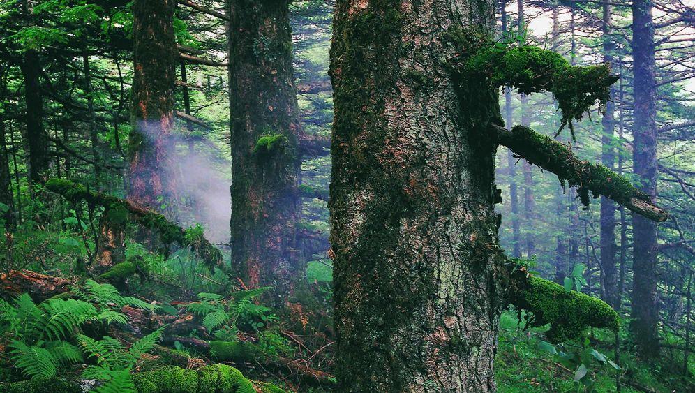 Unesco: Diese Naturstätten sind für das Welterbe nominiert