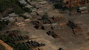 Rekord-Abholzung im Regenwald