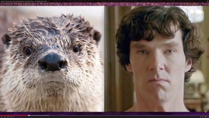 """Aus dem Sherlockotter-Tumblr-Blog: Otter und Cumberbatch als """"Sherlock"""""""
