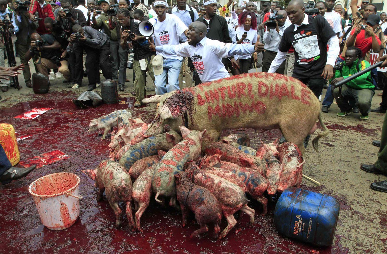 Kenia/ Diätenerhöhung/ Protest/ Schweine