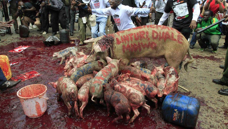 Demo mit Schweinen in Nairobi: Blut als Symbol der Gier