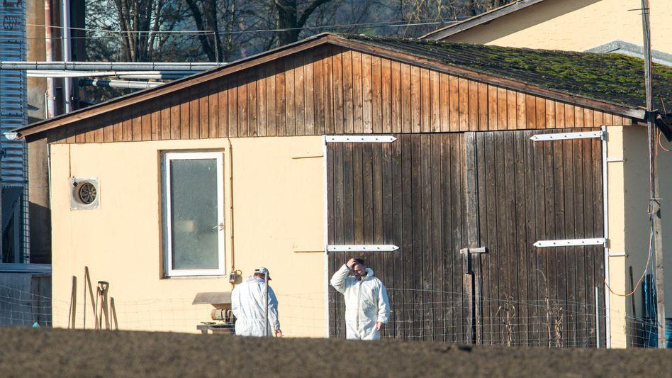 Geflügelhof in Roding (Bayern): Knapp 13.000 Vögel werden notgeschlachtet