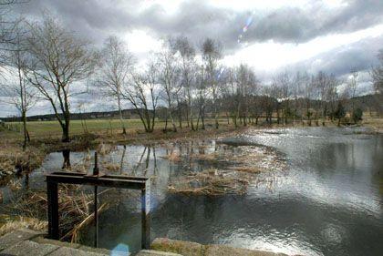 """Tümpel in Brandenburg: """"Kleine Gewässer sind als Kohlenstoffspeicher lange unterschätzt worden"""""""