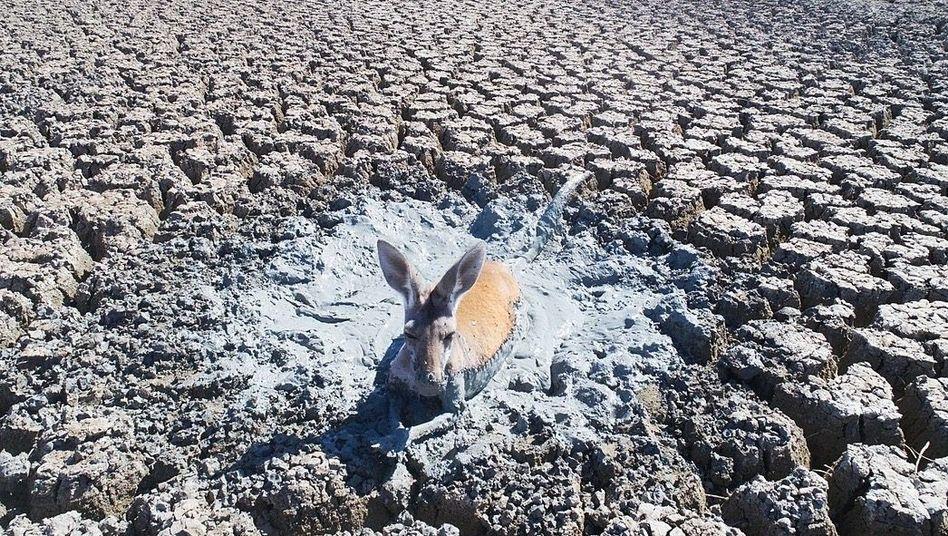 Extremwetter-Ereignis: Dürre in Australien