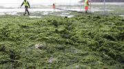 Frankreichs verzweifelter Kampf gegen das grüne Gift