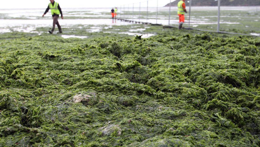 Algenplage: Der grüne Touristenschreck