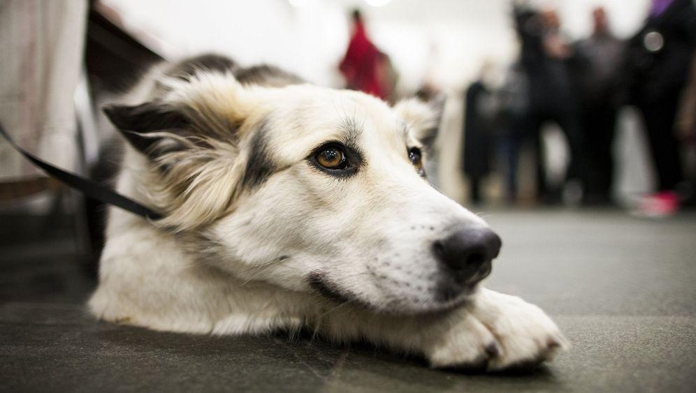 Hund vor Gericht: Kein Tier fürs Büro