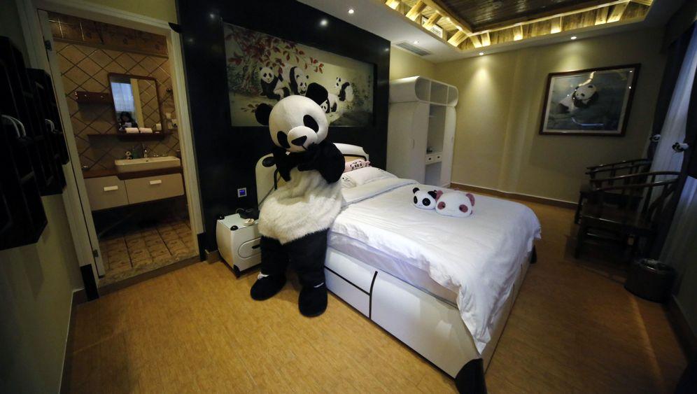 Chinas Panda-Hotel: Zimmer mit Bärblick