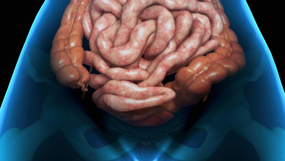 Menschlicher Darm: Antibiotika wirkungslos - was nun?