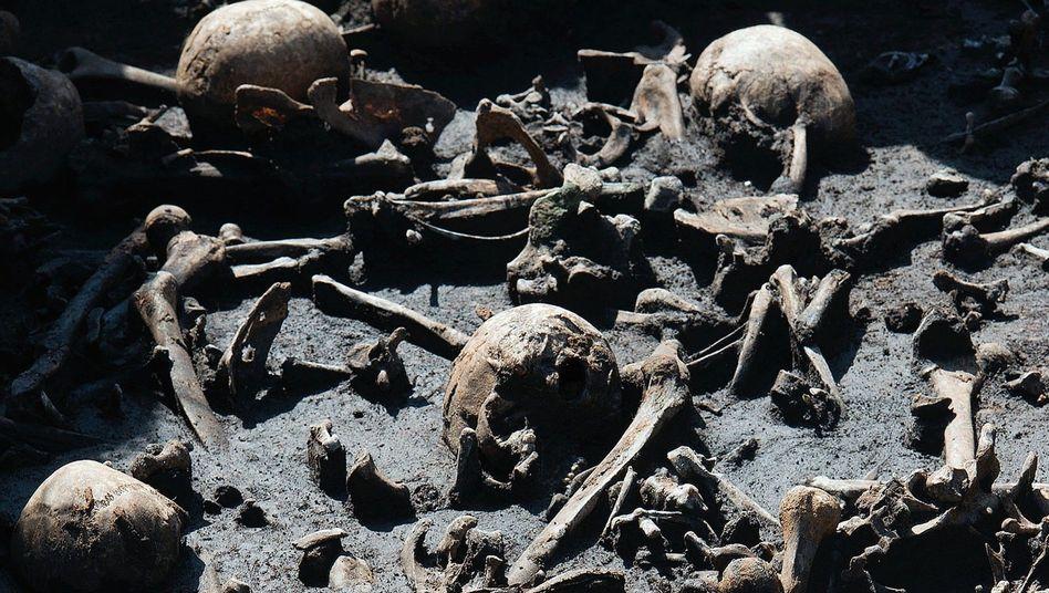 Skelettreste im Tollensetal: Forscher gehen von mehr als 1000 Opfern aus