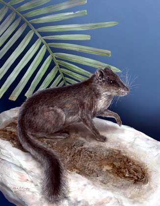 Kha-Nyou:40 Zentimeter langes lebendesFossil