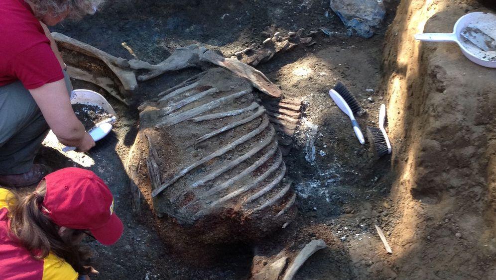 Legende des Pferdesports: Archäologen retten Knochen von Native Diver