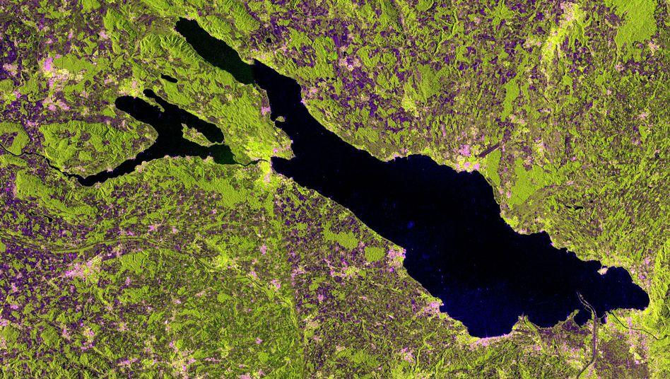 """Aufnahme des jungen Radarsatelliten """"Sentinel-1A"""": Pink eingefärbte Gebäude zeigen die Bebauungslage rund um den Bodense"""