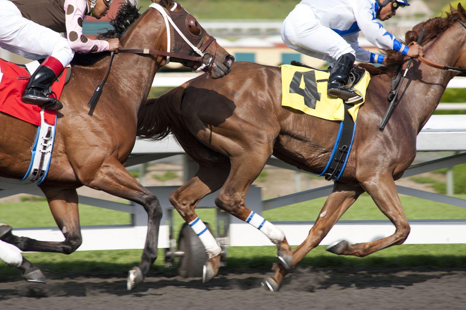 TV-Luck-Horse Deaths