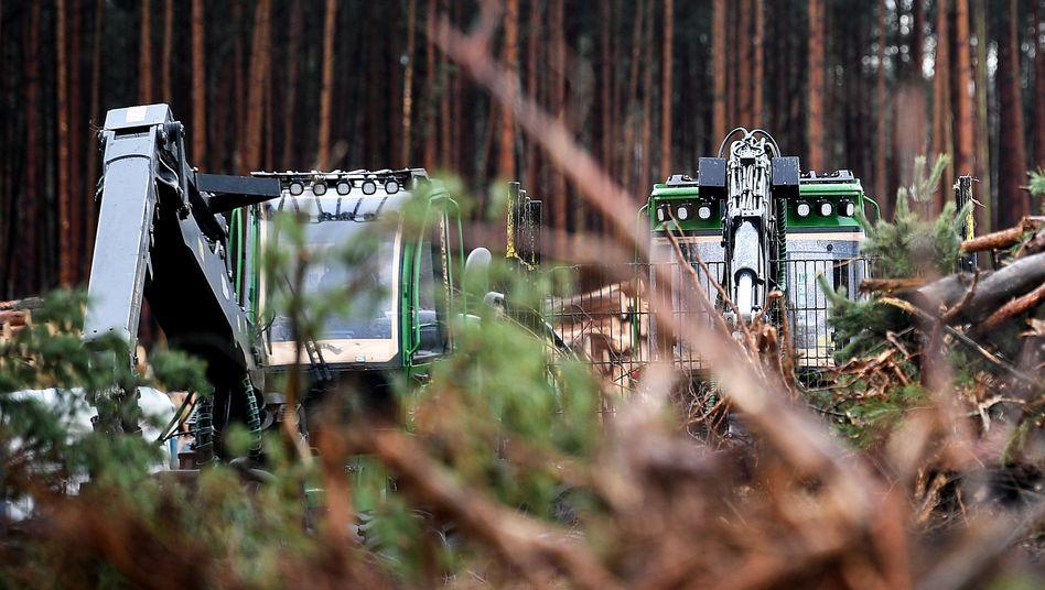 Rodungsmaschinen stehen auf dem Gelände für die geplante Tesla-Fabrik in Grünheide: Warnung an die Investoren