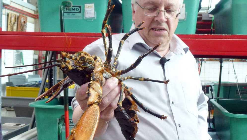 Photo Gallery: German Scientists Have Grand Lobster Plan