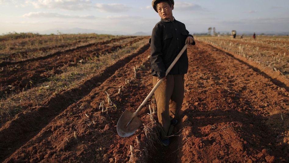 Bauer in Nordkorea (September 2011): Warnung vor neuer Dürre