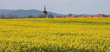 Rapeseed in bloom in Germany. The European Union may be considering a move away from biofuels.