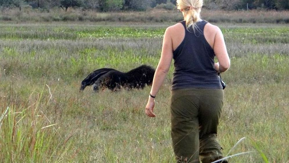 Forscherin in Brasilien: Auf Du und Du mit dem Ameisenbär