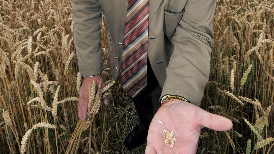 Bayerns Landwirtschaftsminister: Helmut Brunners (CSU) Haus gab Geld für Heu
