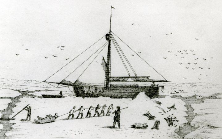 Die »Grönland« (Juni 1868): Im Eis gefangen, Eisbär erlegt