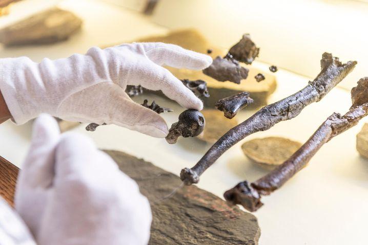 Knochen der Hand eines männlichen Danuvius guggenmosi werden untersucht