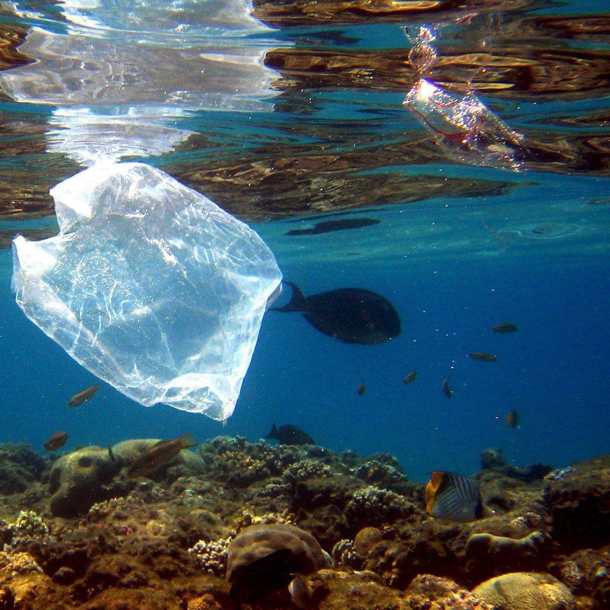 YMZ Fischb/ürste aus verdicktem Kunststoff mit Deckel zur Reinigung von Fischhaut blau