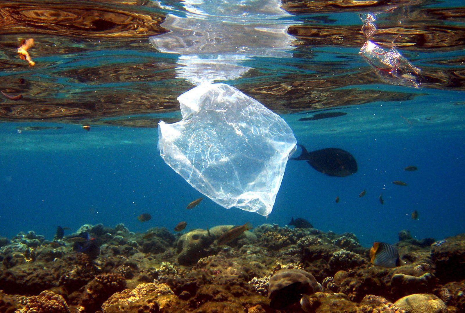 Plastiktüte/ Meer/ Bakterium