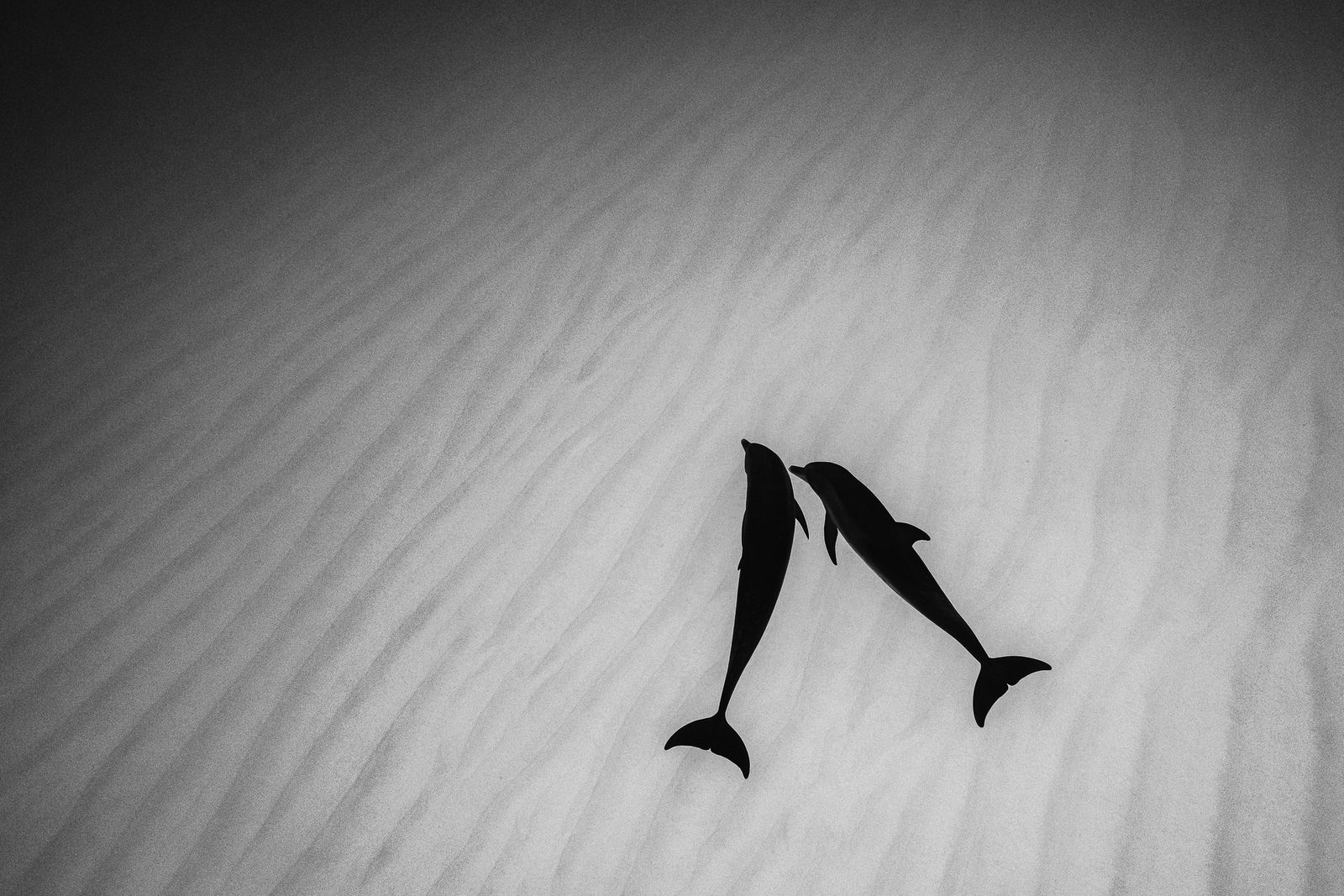 Nature TTL Photographer of the Year 2021 / Underwater
