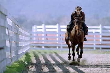 Ein Pferd wurde zur Legende: Seabiscuit im gleichnamigen Film