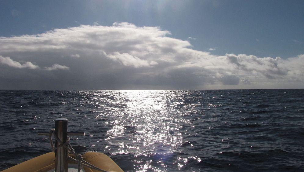 Azoren: Whale Watching vor São Miguel