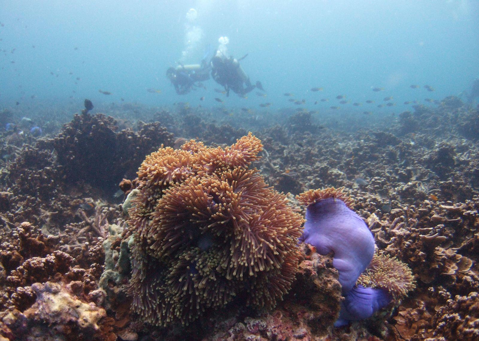Korallenriff/ Malaysia