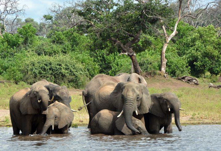 Okawango-Delta in Botswana
