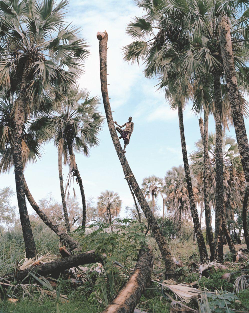 """Die Fotoserie """"Palm Wine Collectors"""" zeigt junge Männer vom Volk der Himba bei ihrer Arbeit in Namibia. Der Künstler Kyle Weeks hat die Aufnahmen in enger Zusammenarbeit mit ihnen gemacht"""