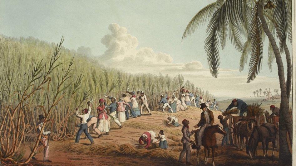 Sklaven arbeiten auf einem Zuckerrohrfeld(kolorierter Stich von William Clark, 1823).